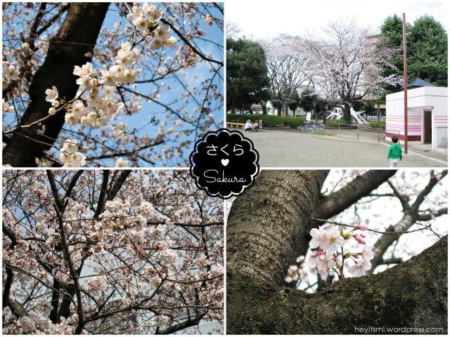 sakura_heyitsmi_blog