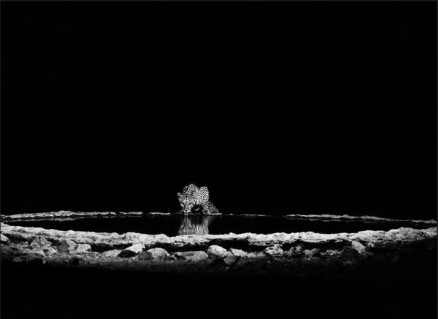 leopardo-heyitsmiblog